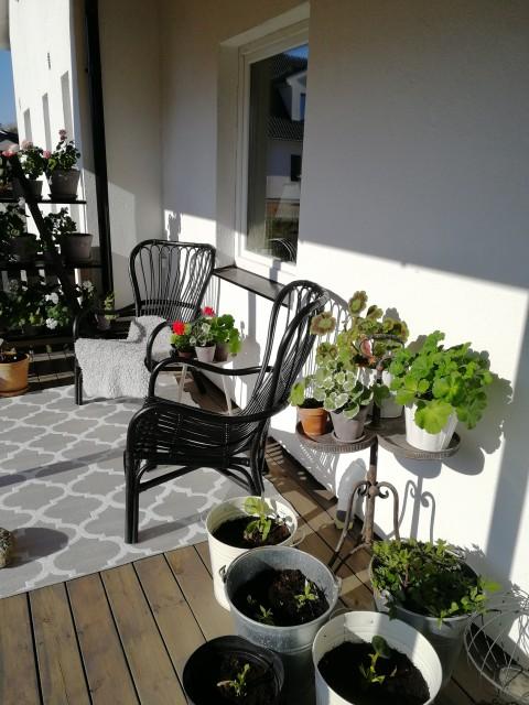 Här har vi fått ut två små bord, som även dom är översållade med pelargoner. På verandan står även planteringar med dahlior, höstflox och astilbe.